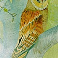 Barn Owl by Olive Denyer