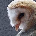 Barn Owl Painterly by Ernie Echols