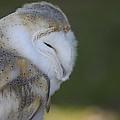 Barn Owl by Jenny Potter