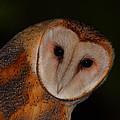 Barn Owl Portrait II by Bruce J Robinson