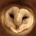 Barn Owl by TnBackroadsPhotos