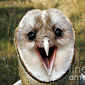 Barn Owl Tyto Alba by Kenneth M Highfill