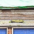 Barn Repairs by Tom Gowanlock