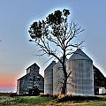 Barn Tree by David Matthews
