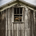 Barn Window by Margie Hurwich