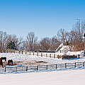Barn With Horses  by Les Palenik