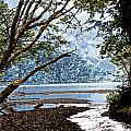 Barnes Creek At Lake Crescent - Washington by Marie Jamieson