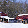 Barns And Horses In Winter by Duane McCullough
