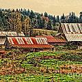 Barns On A Farm by Dawn Harris
