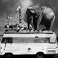 Barnum And Bailey Goes On A Road Trip 5d22705 Vertical Black And White by Wingsdomain Art and Photography