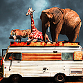 Barnum And Bailey Goes On A Road Trip 5d22705 by Wingsdomain Art and Photography