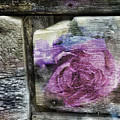Barnwood Rose by Evie Carrier