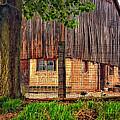 Barnyard 2 by Steve Harrington