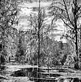 Barr Hammock Preserve  by Howard Salmon