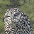 Barred Hoot Owl Photo Art by Constantine Gregory