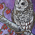 Barred Owl And Berries by Ande Hall