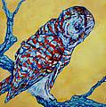 Barred Owl by Derrick Higgins