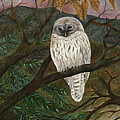 Barred Owl by FT McKinstry