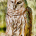 Barred Owl On Moss by Deborah Benoit