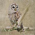 Barred Owl Portrait by Betty LaRue