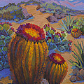 Barrel Cactus In Warm Light by Diane McClary