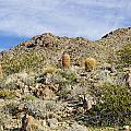 Barrel Cactus by Jim Thompson