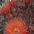 Barrel Cactus by Jen  Brooks Art