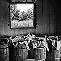 Barrels Of Beans - Bw by Nikolyn McDonald