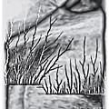 Abstract Trees On Barren Landscape by Walt Foegelle