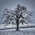 Barren Winter Scene With Tree by Dan Friend