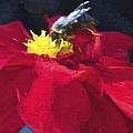 Bartram Bee by Alice Gipson