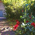 Bartram Red Flowers by Alice Gipson