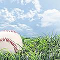 Baseball In Grass by Stephanie Frey