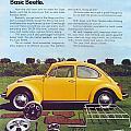 Basic Beetle  by Georgia Fowler