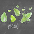 Basil by Lisa Barbero