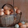 Basket Full Of Eggs by Mary Carol Story
