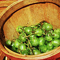 Basket Of Green Grapes by Susan Savad