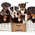 Basket Of Mixed Breed Puppies by Susan Schmitz