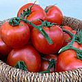 Basket Of Tomatoes  by Chay Bewley