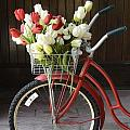Basket Of Tulips by Birgit Tyrrell