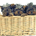 Basket Of Yorkies by Jean-Michel Labat