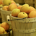 Baskets Of Apricots Squared by Julie Palencia