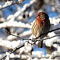 Basking In Winter Light by Sharon Elliott