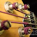 Bass II by Andrea Anderegg