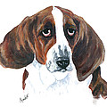Basset Hound Portrait by Barb Capeletti