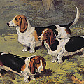 Basset Hounds by English School