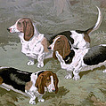 Basset Hounds by Charlie Ross