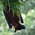 Bat In The Rain by Monalisa Nayak