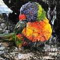 Bath Time  by Diane Greco-Lesser