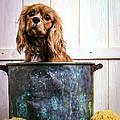 Bath Time - King Charles Spaniel by Edward Fielding